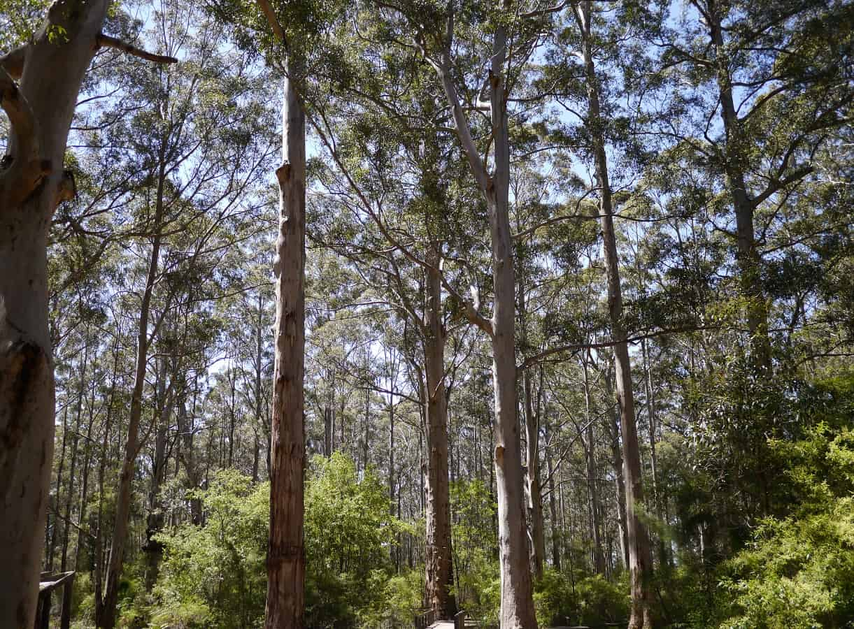 Twenty-four trees