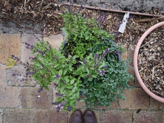 Repurposing Plastic Plant Pots Zero Waste Gardening Treading My Own Path