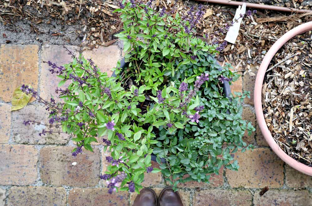 Zero Waste (+ Plastic-Free) Gardening