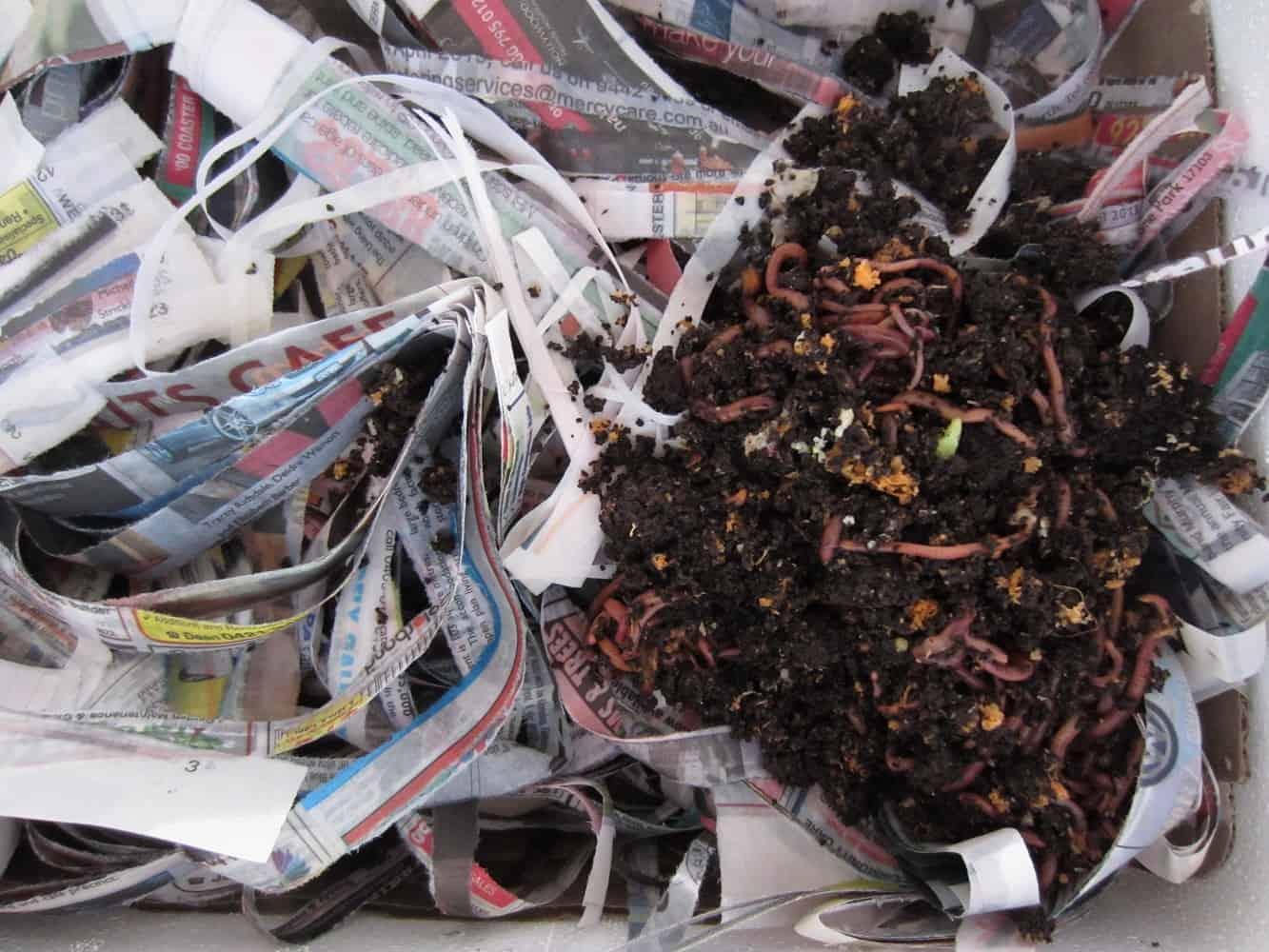How to Build a DIY Worm Farm