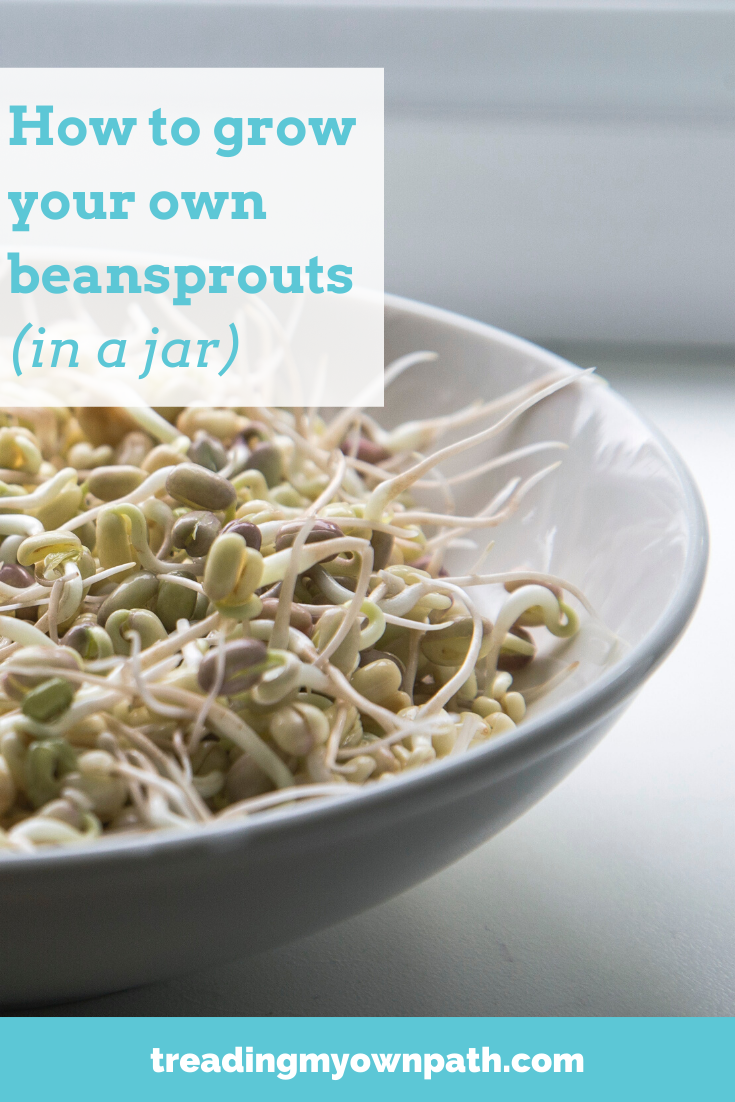 How to Make Your Own Beansprouts