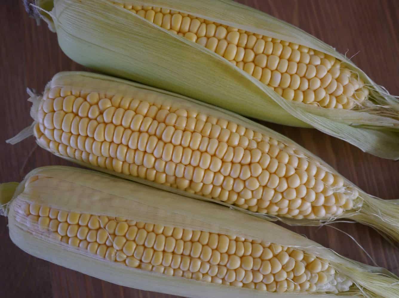 corn1jpg