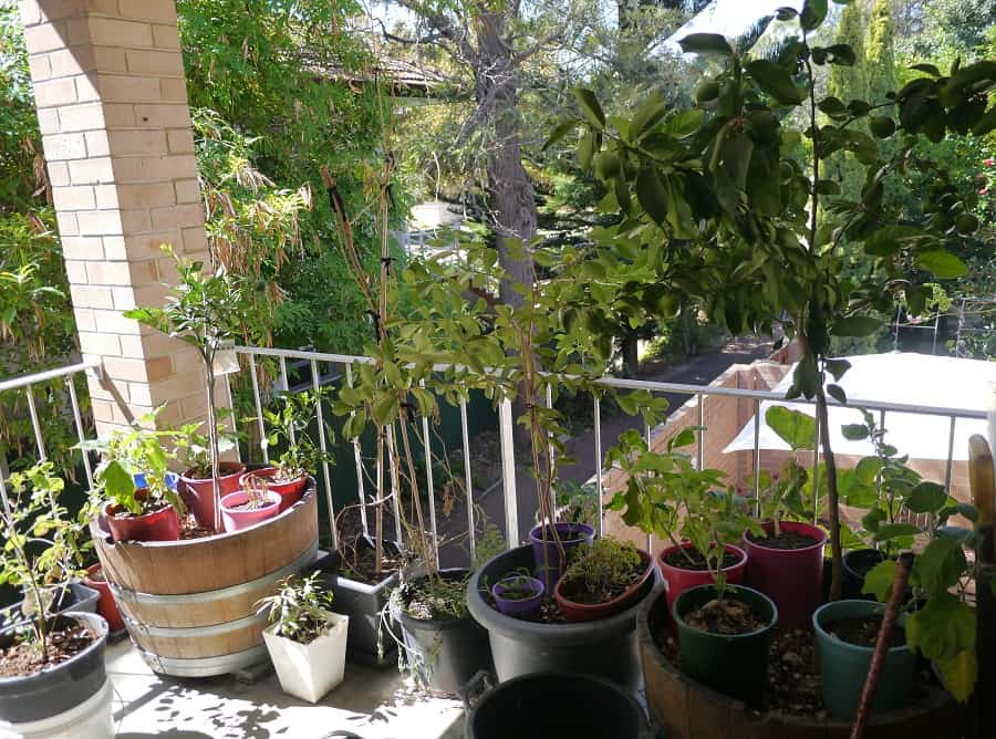 "Not Quite Homesteading: My Balcony ""Farm"" Project"
