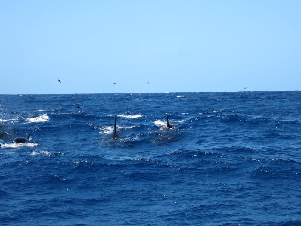 Bremer Canyon orcas