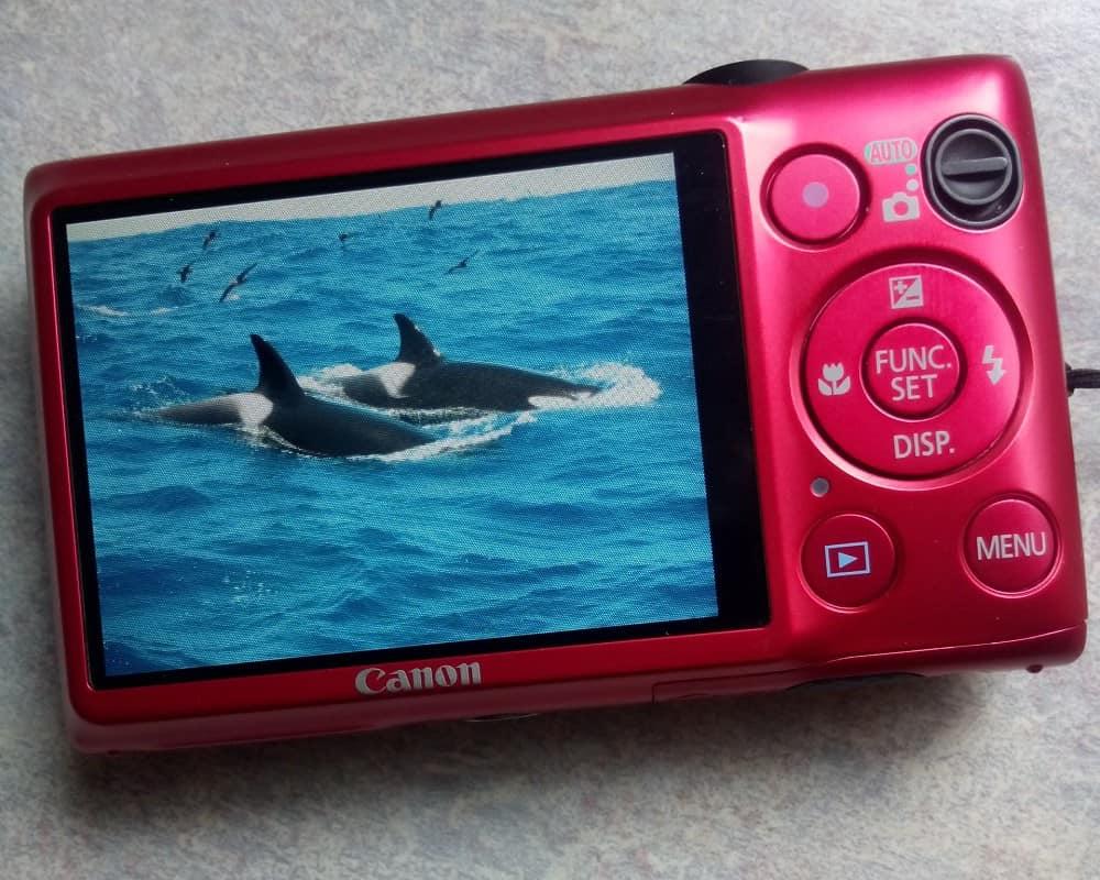 Orcas on camera