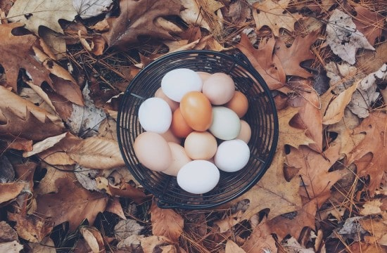 Eggs Autumn Mott