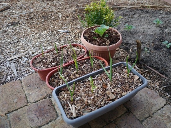 Gardening in containers Zero Waste Gardening Treading My Own Path