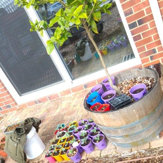 Plastic Plant Pots Zero Waste Gardening Treading My Own Path