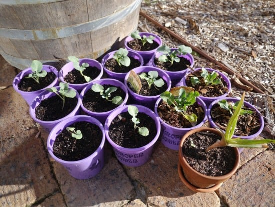 Reusing old plastic plant pots zero waste gardening Treading My Own Path
