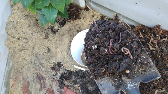 Worms for DIY Dog Poo Worm Farm