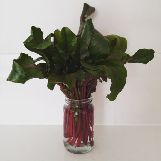 Beetroot Leaves in a Jam Jar