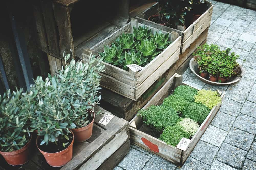 Great 10+ Practical Ideas For Eco Friendly Plant Pots