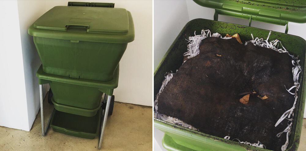 Reducing Food Waste with Worm Farms: Trialing the Hungry Bin