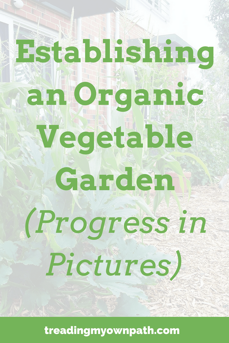 Establishing an Organic Vegetable Garden (Progress in Pictures)