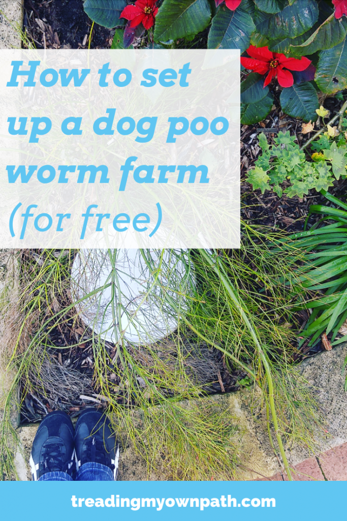 How To Set Up A Dog Poo Worm Farm Treading My Own Path Less