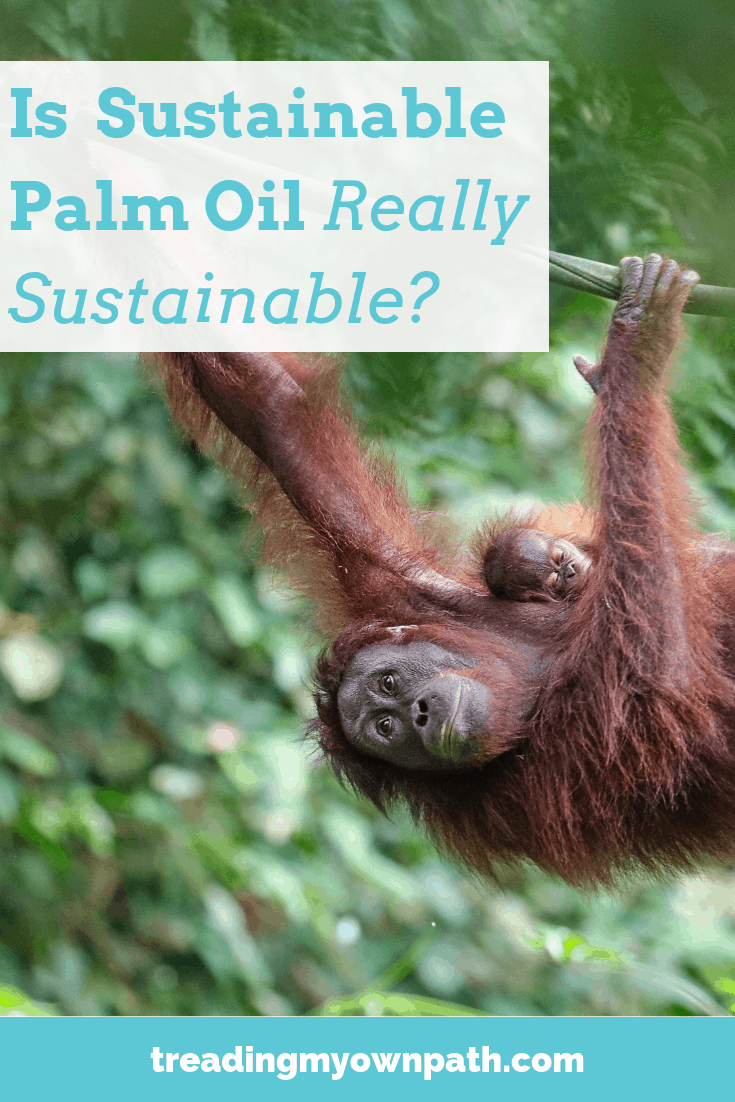 What\'s the Controversy with Palm Oil (and is Sustainable Palm Oil Actually Sustainable)? from Treading My Own Path | Zero Waste + Plastic-Free Living | Less waste, less stuff, sustainable living. Eco-friendly choices, palm oil investigations, boycott palm oil, Roundtable for Sustainable Palm Oil, eco-friendly choices, eco friendly living, is palm oil bad, orangutans, Borneo, Sumatra, deforestation, habitat loss, endangered species. More at https://treadingmyownpath.com