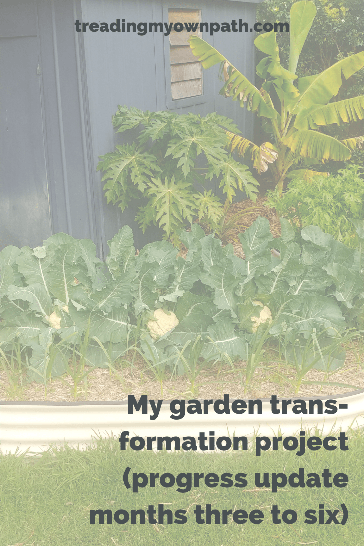 My garden transformation project (progress update: month three to six)
